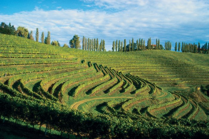 Jeruzalem – Beautiful Place of Wavy Vineyards